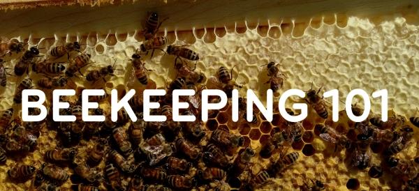 Beekeeping101.jpg