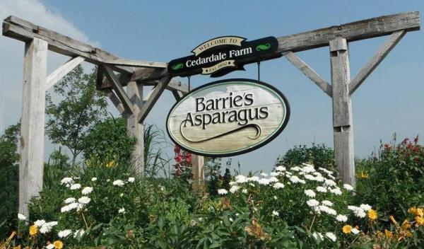 BarriesAsparagus2