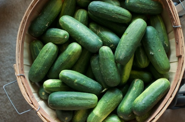 bushel-of-pickling-cucumbers